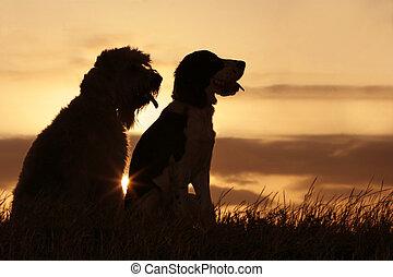 vrienden, op, ondergaande zon