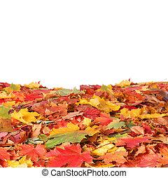 vrijstaand, autumn leaves