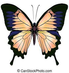 vrijstaand, gele, illustratie, achtergrond, sinaasappel, witte , butterfly.