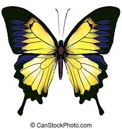 vrijstaand, gele, illustratie, achtergrond, witte , butterfly.