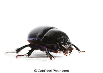 vrijstaand, insect