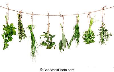 vrijstaand, keukenkruiden, achtergrond, hangend, fris, witte...