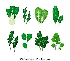 vrijstaand, slaatje, vector, groen groenten, set, bladeren, illustratie, witte