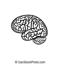 vrijstaand, zwart wit, hersenen, omtrek, vector, logo., gyrus, silhouette, logotype., menselijk, intelligentie, illustration.