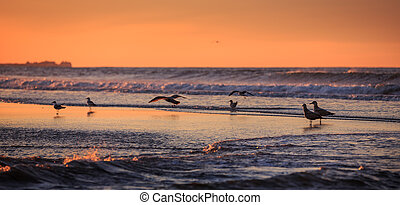 vroeg, oceanfront, vogels, morgen
