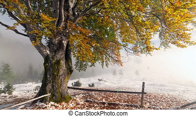 vroeg, winter, achter, sneeuw bedekte, bladeren