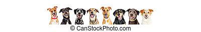 vrolijke , honden, in een rij, -, leaderboard