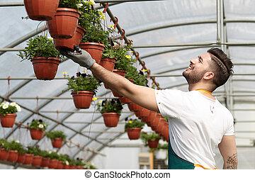 vrolijke , mannelijke , babykamer, arbeider, garneersel, planten, in, broeikas