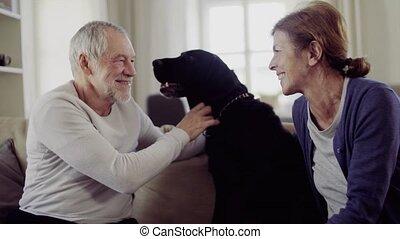 vrolijke , senior koppel, zittende , op, een, sofa, binnen, thuis, spelend, met, een, dog.