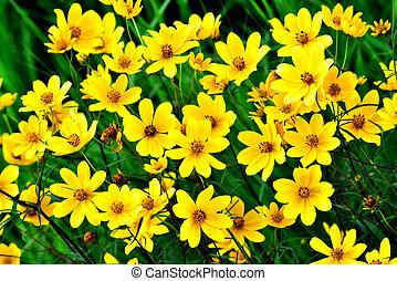vrolijke , wildflower, -, gele, gezichten