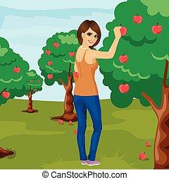 vrouw, appel boomgaard, boompje, jonge, lengte, volle, brunette, verticaal, pluk, rood