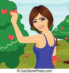 vrouw, boomgaard, boompje, jonge, appeltjes , pluk, rood