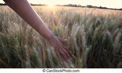 vrouw, bovenzijde, meiden, jonge, oogst, hand, akker, ondergaande zon , volwassene, vrouwlijk, gevoel, of, zonopkomst, gerst