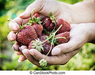 vrouw, lente, handvol, jonge, scène, verse aardbeien