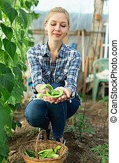 vrouw, oogst, bonen, breed