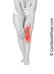 vrouw, skelet, chiropraktijk, pijn, behandelingen, vrijstaand, aangepunt, concept, achtergrond, knie, witte , benen, pijn