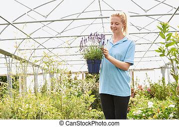 vrouwelijke werknemer, op, het centrum van de tuin, vasthouden, lavendel, plant, in, broeikas