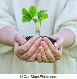 vrouwenhanden, vasthouden, terrein, met, groene, spruit