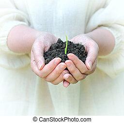 vrouwenhanden, vasthouden, vast lichaam, met, groene, spruit