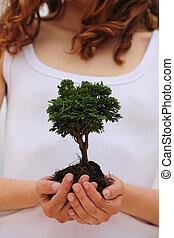 vrouwenholding, een, kleine boom, in, haar, handen