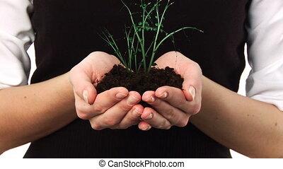 vrouwenholding, een, plant, in, haar, hand