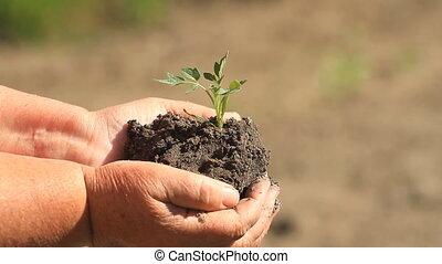 vrouwenholding, groen plant