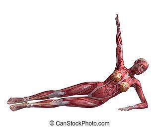 vrouwlijk, abs, workout