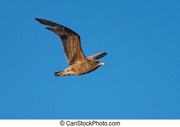 vue à vol d'oiseau, sky.