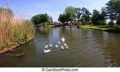 vue, 4k, rivière cygne, canal, surprenant, famille
