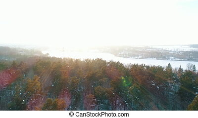 vue, aérien, hiver, forêt