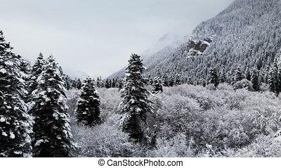 vue aérienne, de, a, forêt, dans, a, hiver, nuageux, day.,...