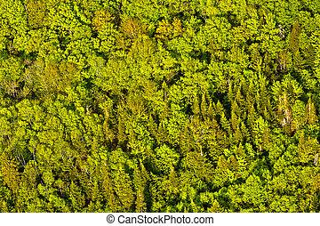 vue aérienne, de, arbres verts, forêt, dans, québec, canada