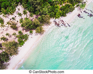 vue aérienne, de, beau, plage, et, mer, à, arbre cocotier