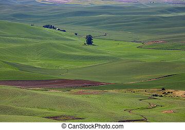 vue aérienne, de, champs