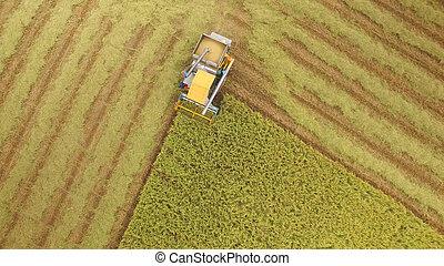 vue aérienne, de, combiner, sur, récolte, champ