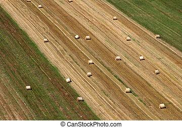 vue aérienne, de, récolte, champs, dans, été