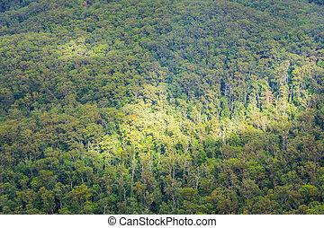 vue aérienne, sur, australien, forêt