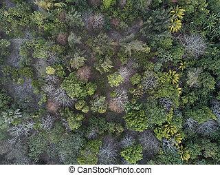vue aérienne, sur, forêt