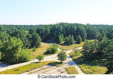 vue aérienne, sur, les, forêt pin