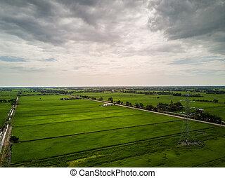 vue aérienne, -, vert, paddy, champs