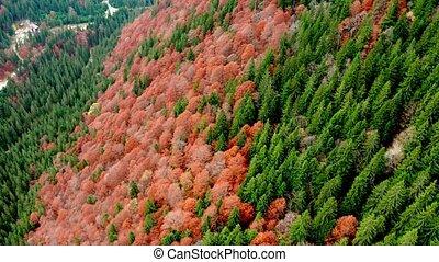 vue, automne, panoramique, forêt