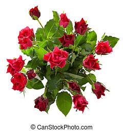 vue, bouquet, roses, sommet rouge