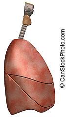 vue côté, poumons