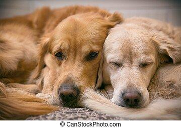 vue, de, deux, chiens, mensonge