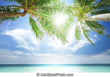 vue, de, gentil, plage tropicale, à