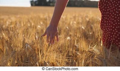 vue, femme, haut, blé, arrière-plan., par, lumière soleil, girl, orge, meadow., main, champ, mouvement, jeune, oreilles, fin, crop., lent, mûre, croissant, en mouvement, marche, sur, arrière, doré, caresser