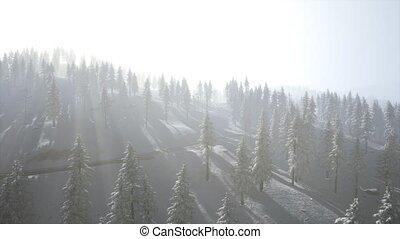 vue, froid, aérien, hiver, pendant, matin, forêt