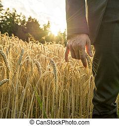 vue frontale, de, personne affaires, toucher, une, oreille, de, mûre, doré, blé