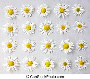 vue, lay., gris, arrangement fleur, printemps, concept., sommet plat, été, fond, pâquerettes