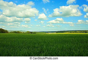 vue panoramique, de, champ vert, bleu, ciel, à, nuages